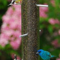 Birds eating from Droll Yankees® Bottoms Up Finch Feeder