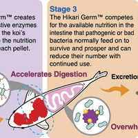Explanation of benefits of Hikari Germ