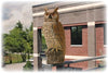 Dalen® Natural Enemy Scarecrow® Rotating-Head Owl protecting balcony garden