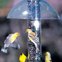 Droll Yankees® Seattle Rain Guard protecting birds from rain while feeding
