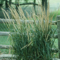 Shoreline grasses treated by Airmax® Pond Logic® Shoreline Defense® Aquatic Herbicide