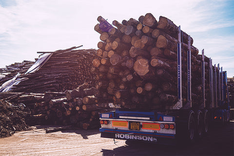 Logs for sale East Sussex