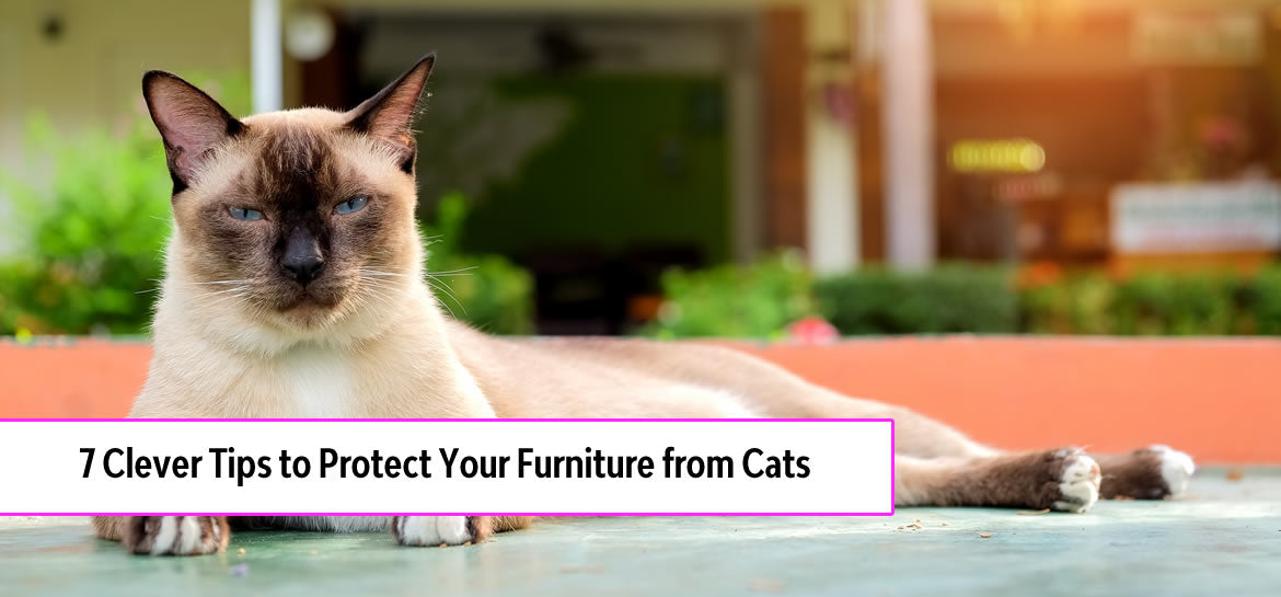 7 Clever Tips to Protect Furniture from Cats