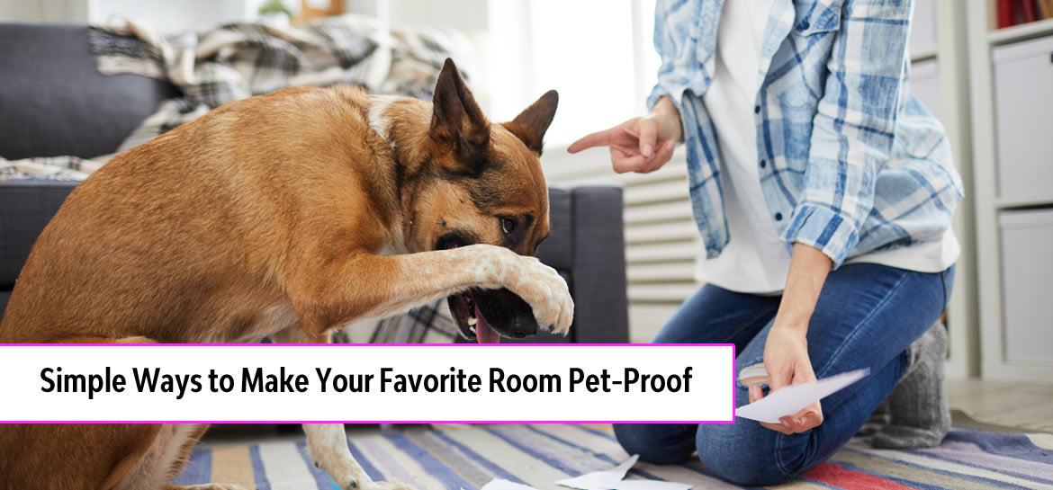 Simple Ways to Make Your Favorite Room Pet-Proof