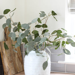 Grey Wash Eucalyptus Stem