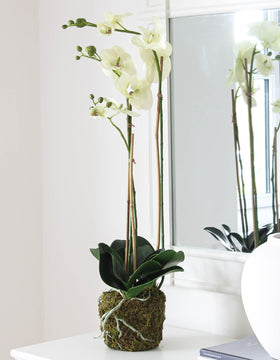 Tall Moss Covered Faux White Orchid