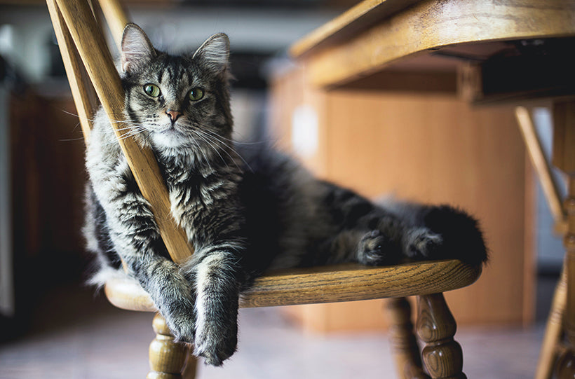 cat sitting in chair