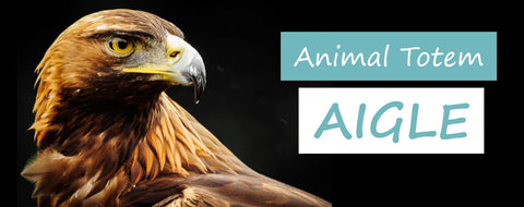 animal totem aigle | Passion Attrape Reve