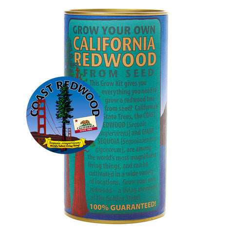 Grow a Tree - California Redwood Tree Kit