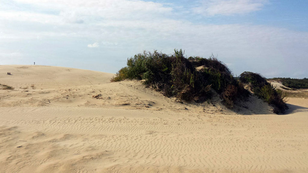 Dunes at Jockey's Ridge State Park in Nags Head, NC
