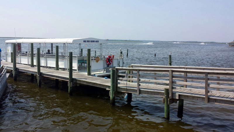 Nags Head Dolphin Tours Outer Banks NC