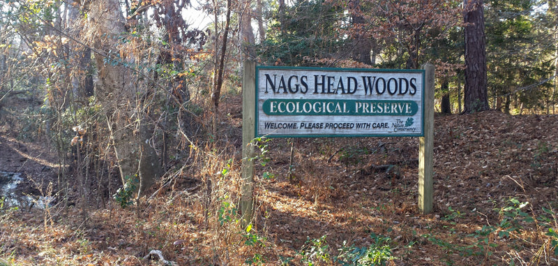 Nags Head Woods Ecological Preserve Outer Banks NC