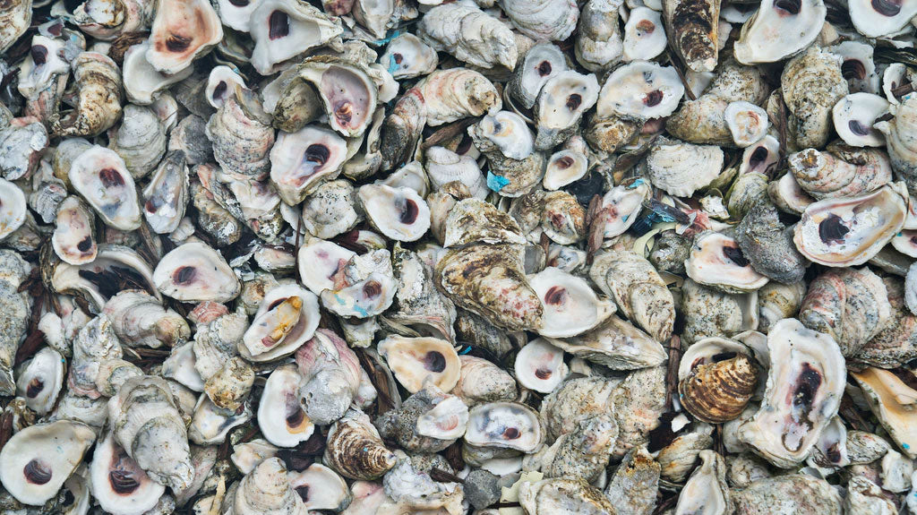 Oysters Seafood Outer Banks NC