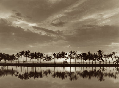 Waikoloa Palms by Cathy Shine