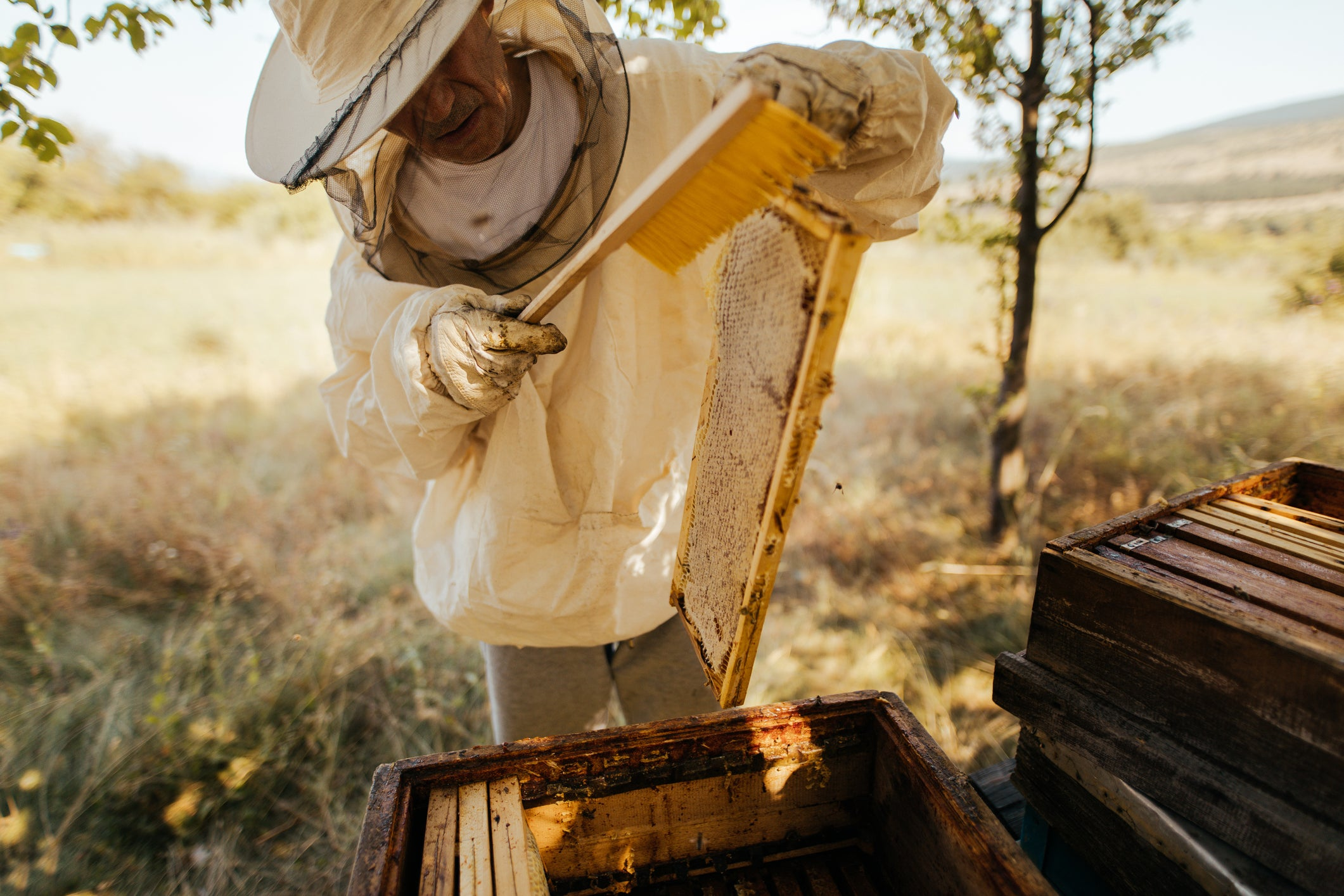 Organic Natural Australian Manuka Honey Beekeeper