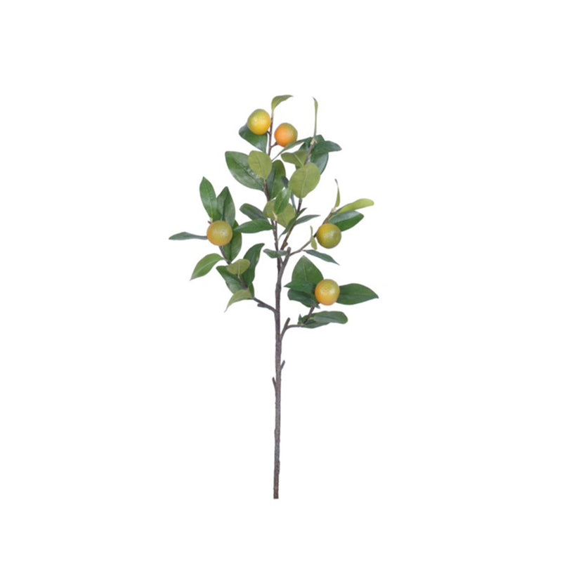 Kumquat Stem