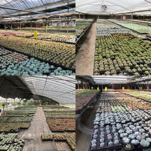 aPlanter Nurseries