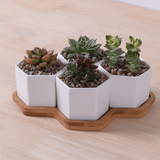 Hexagon Flowerpots White Ceramic Succulent Plant Pot with Bamboo Stand