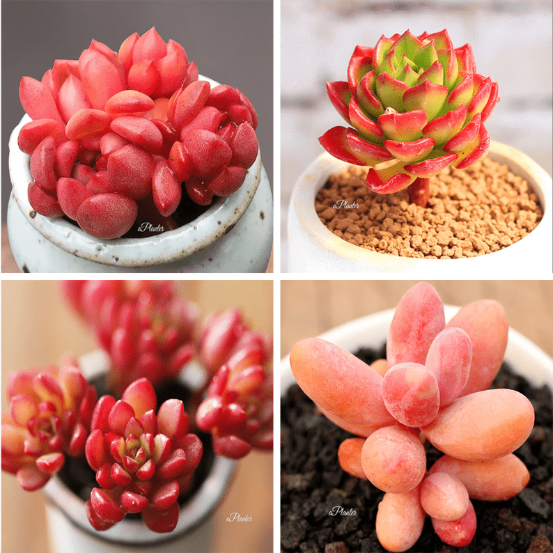 RARE SUCCULENTS BUNDLE DEAL D aplanter