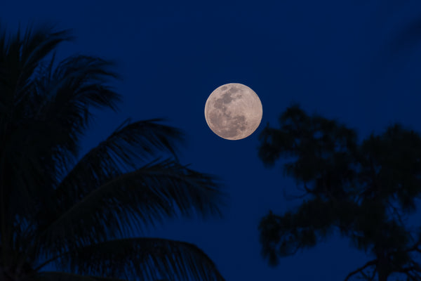 Florida Pink Super Moon