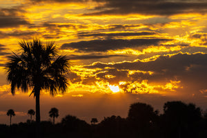 Palm Sunrise Silhouettes