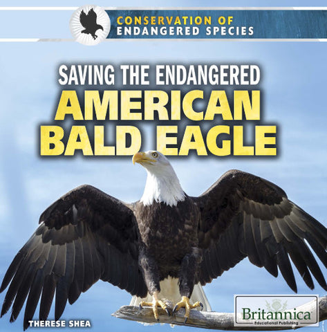 Saving the Endangered American Bald Eagle