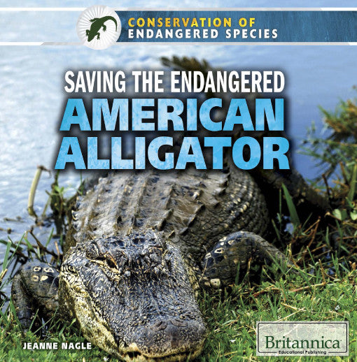 Saving the Endangered American Alligator