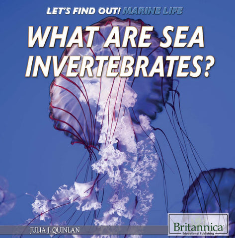 What Are Sea Invertebrates?