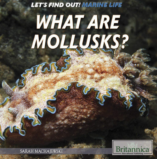 What Are Mollusks?