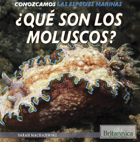 ¿Qué son los moluscos? (What Are Mollusks?)