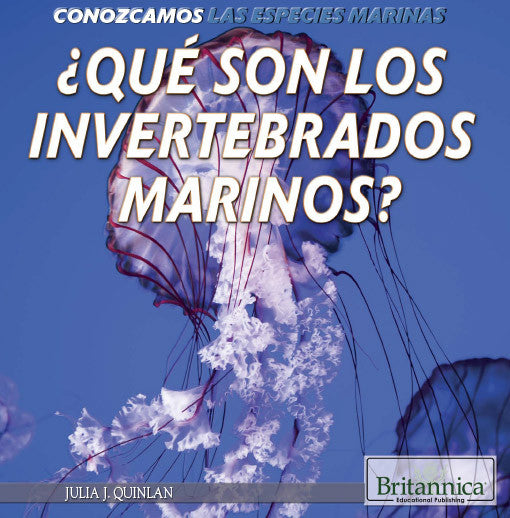 ¿Qué son los invertebrados marinos? (What Are Sea Invertebrates?)