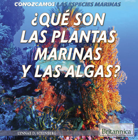¿Qué son las plantas marinas y las algas? (What Are Sea Plants and Algae?)