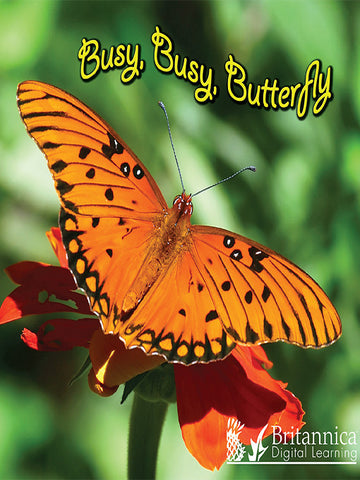 Busy, Busy, Butterfly