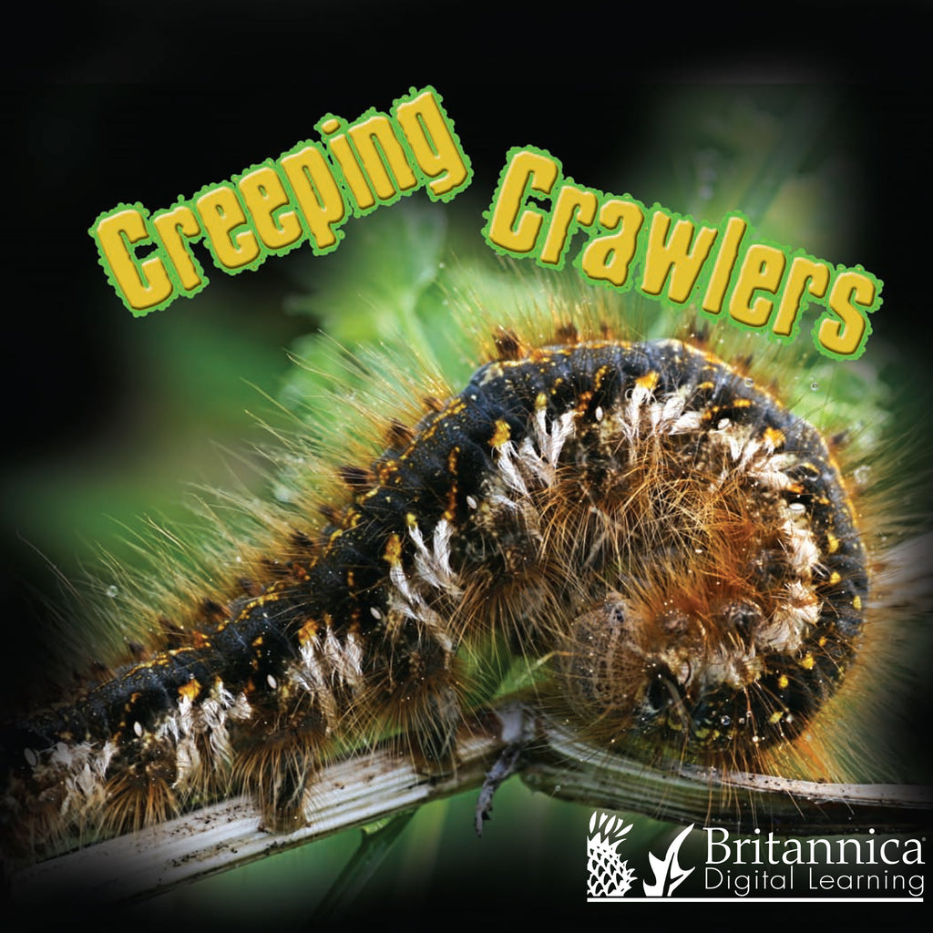 Creeping Crawlers