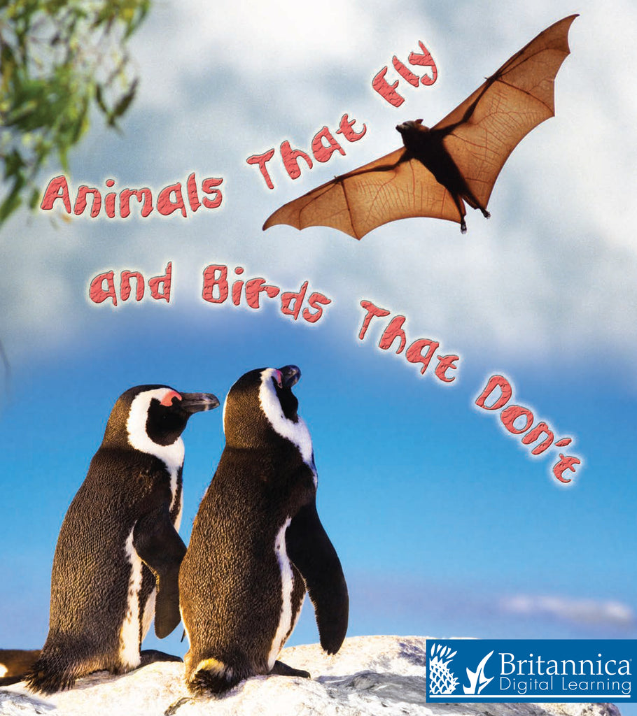 Animals That Fly and Birds That Don't