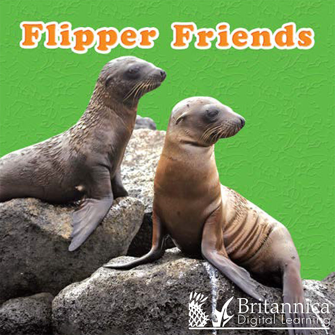 Flipper Friends