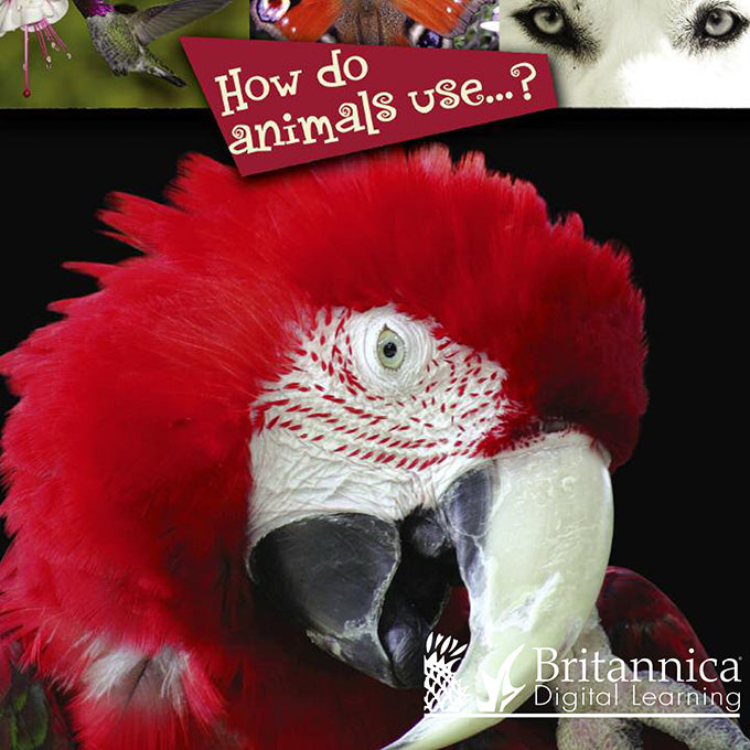 How do animals use…?