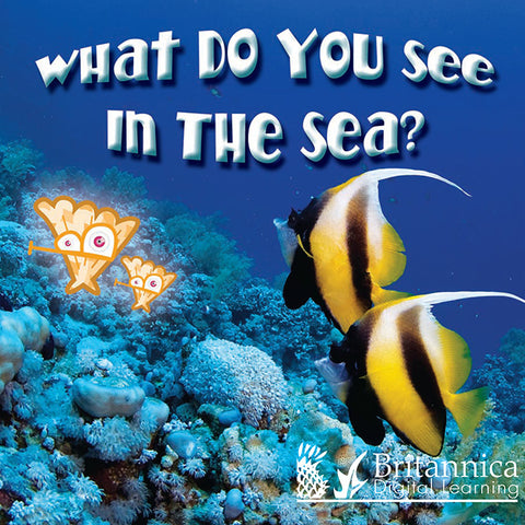 What Do You See in the Sea?