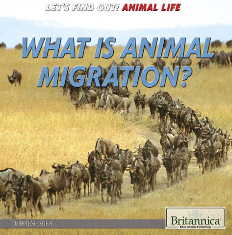 What is Animal Migration?