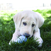 Load image into Gallery viewer, KONG Puppy Snacks Dog Treats