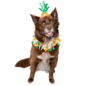 Pet Krewe Pineapple Hat & Collar Set for Cats & Dogs
