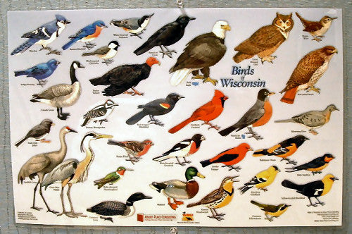 Birds of Wisconsin Placemat