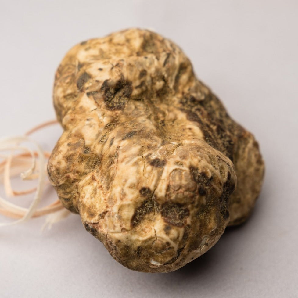 Fresh White Winter Truffles | Pre Order Only