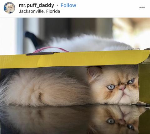 15 of the Cutest Cat in a Box Photos!
