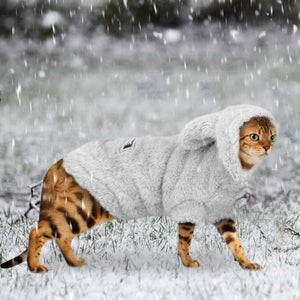 Teddy Bear Winter Jacket For Cats and Small to Medium Dogs