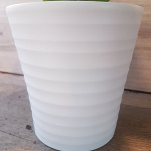 White Rippled Indoor Pot