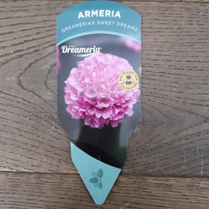 1ltr Armeria Sweet Dreams