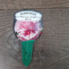 Load image into Gallery viewer, 1ltr Dianthus Garden Pink Doris