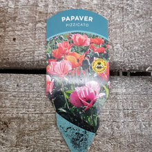Load image into Gallery viewer, 1ltr Papaver Pizzicato