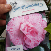 Load image into Gallery viewer, Camellia Japonica 'William Bartlett'